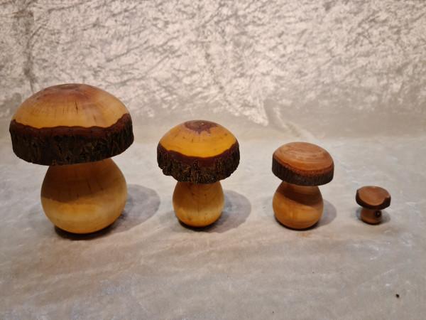 Holz - Pilze